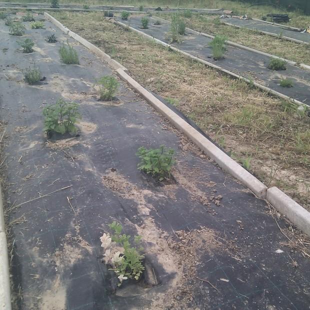 Erbaio – Impianto di irrigazione