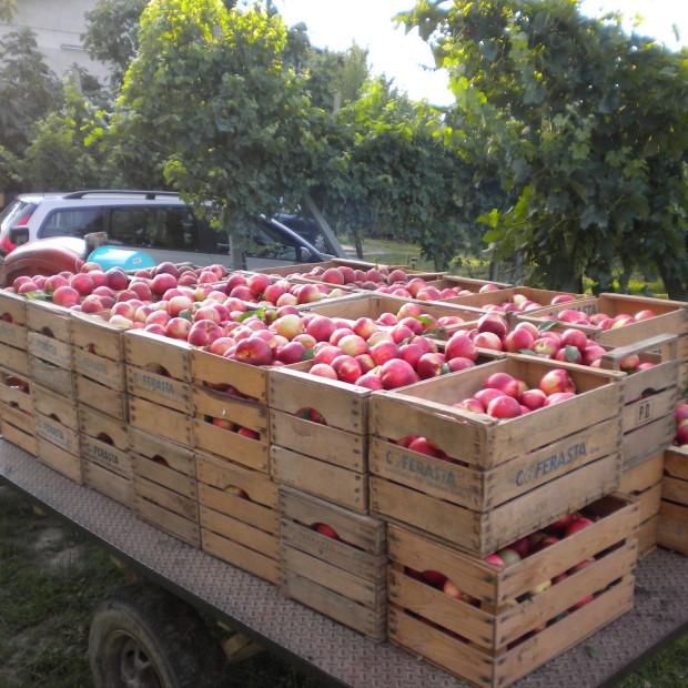 Anche la frutta di stagione a casa… la cassetta a domicilio si può ingrandire