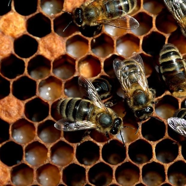 Perchè non diventare apicoltore…