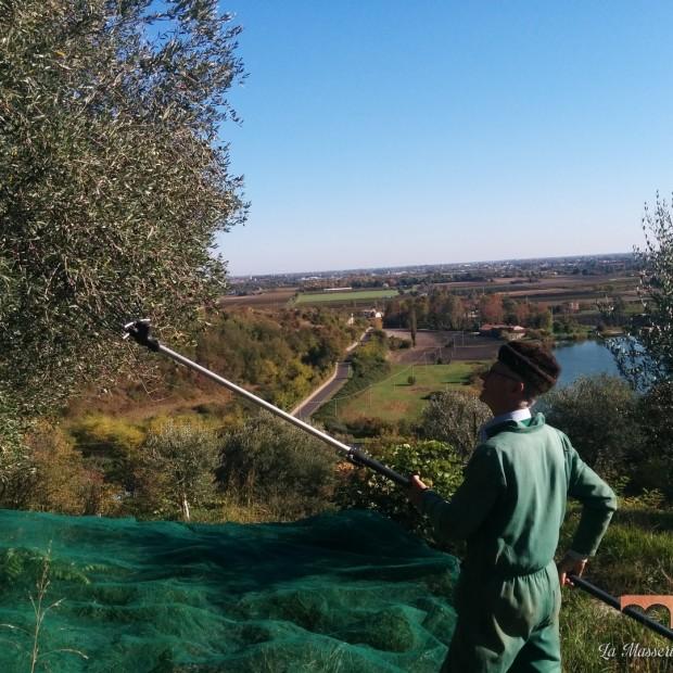 Raccolta di olive 2016